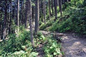 Ścieżka w stronę Doliny Strążyskiej.