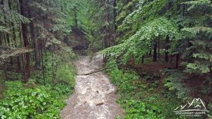 Potok Porębianka.