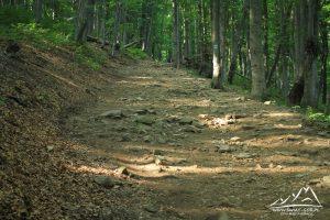 Ścieżka wśród lasu.